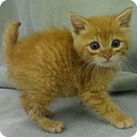 Adopt A Pet :: Moe - Olive Branch, MS