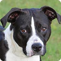 Adopt A Pet :: Dixie - Englewood, FL