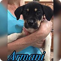 Adopt A Pet :: Armani - Smithtown, NY