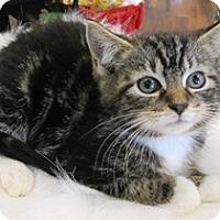 Adopt A Pet :: Beth - Lebanon, PA