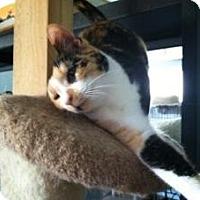 Adopt A Pet :: Confetti - Mission Viejo, CA