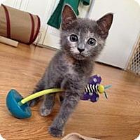 Adopt A Pet :: Gabbie - Vero Beach, FL