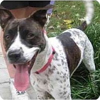 Adopt A Pet :: Curly - Reisterstown, MD