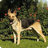 Adopt A Pet :: Parker - Laguna Niguel, CA