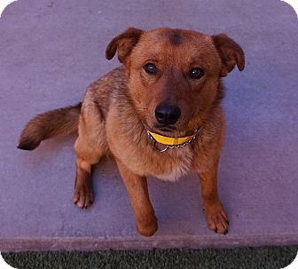 Shepherd (Unknown Type) Mix Dog for adoption in Farmington, New Mexico - Grizzley
