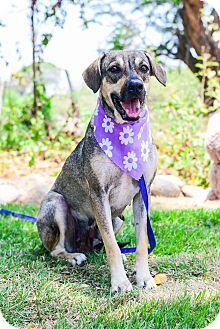 Shepherd (Unknown Type) Mix Dog for adoption in Victoria, British Columbia - Gaby