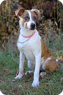 Catahoula Leopard Dog Mix Dog for adoption in Waldorf, Maryland - Mattie