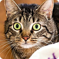 Adopt A Pet :: Tiara - Chesapeake, VA