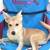 Adopt A Pet :: Missy - Taneytown, MD