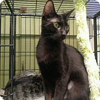 Adopt A Pet :: LICORICE - Cleveland, TN