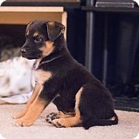 Adopt A Pet :: Atari - Sacramento, CA