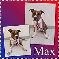 Adopt A Pet :: Max - Royal Palm Beach, FL