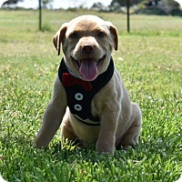 Adopt A Pet :: Earl - Weatherford, TX