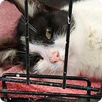 Adopt A Pet :: Jovi - Lagrange, IN