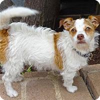 Adopt A Pet :: TALI - Marina Del Ray, CA