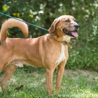 Adopt A Pet :: Judson - Louisville, IL