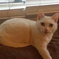 Adopt A Pet :: Princess - Burbank, CA