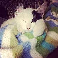 Adopt A Pet :: Princess Patch - San Antonio, TX