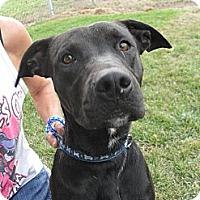 Adopt A Pet :: Bud #5186 - Jerome, ID