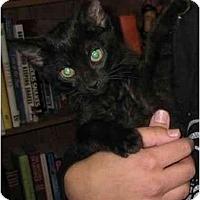Adopt A Pet :: Annie - Davis, CA