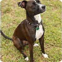 Adopt A Pet :: Molly - Miami, FL