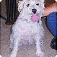 Adopt A Pet :: Patrik - Jacksonville, FL