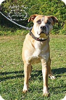 Labrador Retriever/Mountain Cur Mix Dog for adoption in Fort Valley, Georgia - Bolt