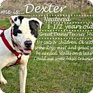 Adopt A Pet :: Dexter (3)