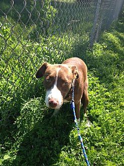 Hound (Unknown Type) Mix Dog for adoption in Ravenna, Texas - Red Junior