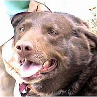 Adopt A Pet :: L-Hershey - Tyler, TX