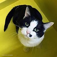Adopt A Pet :: Ande - Tucson, AZ