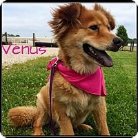Adopt A Pet :: Venus - Jasper, IN