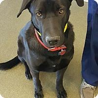 Adopt A Pet :: Sweetie - oklahoma city, OK