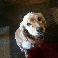 Adopt A Pet :: Sandy - Santa Barbara, CA