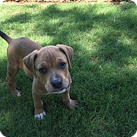 Adopt A Pet :: Mousse - Alpharetta, GA