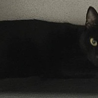 Adopt A Pet :: Iris - Mount Sterling, KY