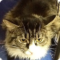 Adopt A Pet :: Princess - Webster, MA