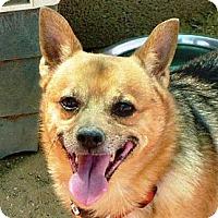 Adopt A Pet :: Trey - Las Cruces, NM