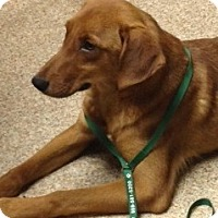 Adopt A Pet :: Copper - Covington, KY