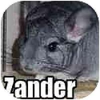 Adopt A Pet :: Zander - Virginia Beach, VA