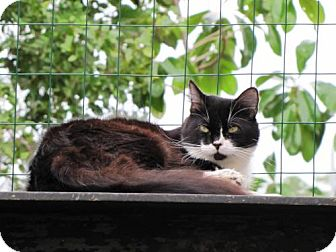Domestic Longhair Cat for adoption in Port St. Joe, Florida - Cozy