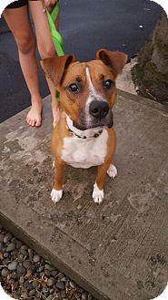 Boxer Mix Puppy for adoption in Milton, New York - Mack