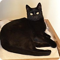 Adopt A Pet :: Augie - Larned, KS