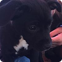 Adopt A Pet :: PIPER WND MARCY - CHICAGO, IL