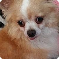 Adopt A Pet :: Lindsay - Crump, TN