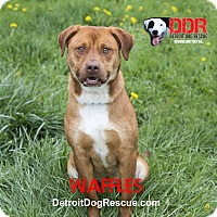 Adopt A Pet :: Waffles - St. Clair Shores, MI