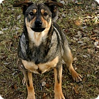Adopt A Pet :: Mike - Pipe Creed, TX