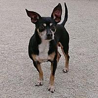Adopt A Pet :: Marcello - Aurora, IL