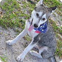 Adopt A Pet :: Diana - Clearwater, FL