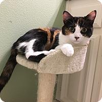 Adopt A Pet :: Scentsy - Arlington/Ft Worth, TX